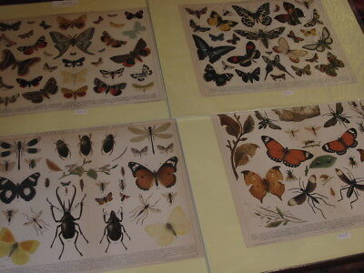 Lot 4 Stück Alte Grafiken-Lithos-Schmetterlinge-Insekten-Insects-No.531