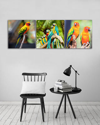 "Colored Parrot Tree Branches-Home Wall Decor Modern Art Prints Canvas 16x16""x3pc"