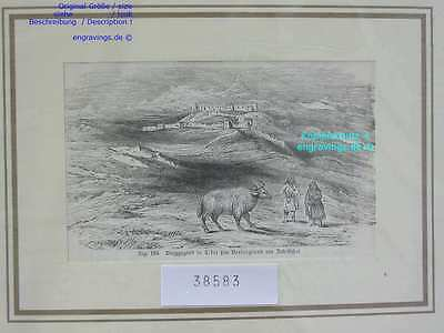 38583-Asien-Asia-China-Tibet-BERGGEGEND-JAK-TH-1885