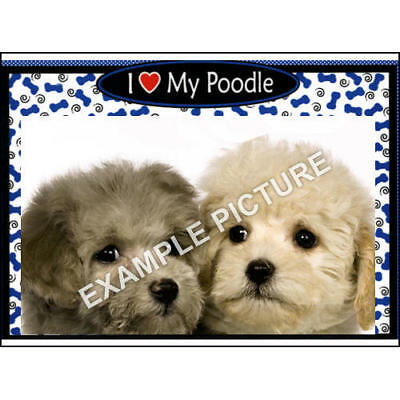 2017 Poodle Blue 3-N-1 Picture Frame,   by Magnetic Memories