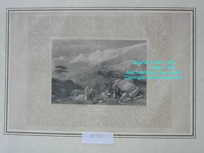 45735-Asien-Asia-Libanon-Lebanon-Liban-CEDARS-Stahlstich-Steel engraving-1870