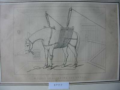 87117-Tiere-Animals-Pferd-Horse-Method of Slinging-Holzstich-wood engraving