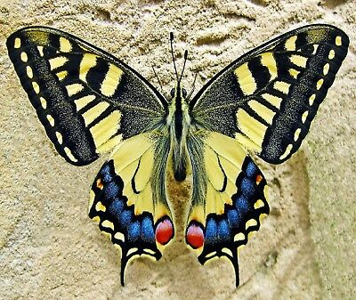 BUTTERFLY IN THE SAND ~ COMPUTER MOUSE PAD  9 x 7