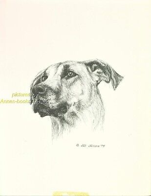 #22 GREAT DANE un-cropped ears dog art print * Pen and ink drawing * Jan Jellins