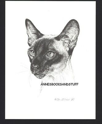 # 414 SIAMESE CAT front view  * cat art print * pen & ink drawing by Jan Jellins