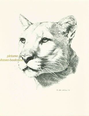 # 95 COUGAR  portrait * wildlife  art print * pen & ink drawing by Jan Jellins