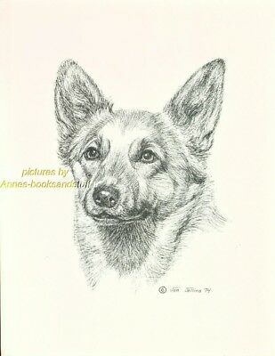 #19 CORGI portrait  *  dog art print * Pen and ink drawing * Jan Jellins