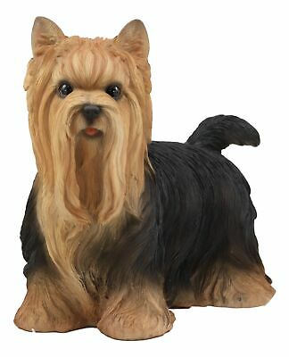 """11.75""""L Life Size Yorkshire Terrier Yorkie Statue Detailed Sculpture Glass Eyes"""