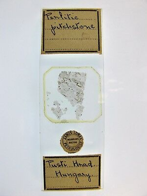Antique Microscope Slide by James Lomax. Perlitic Pitchstone. Pusti Hrad Hungary