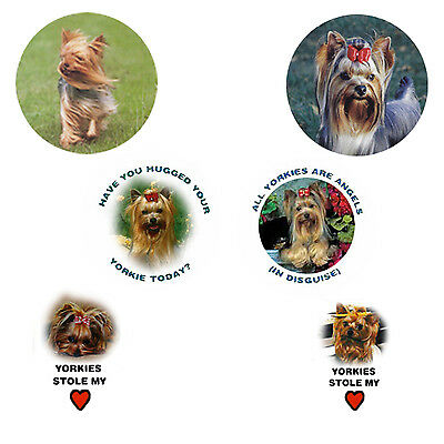 Yorkshire Terrier  Magnets:  6 Way-Cool Yorkies for your Collection-A Great Gift