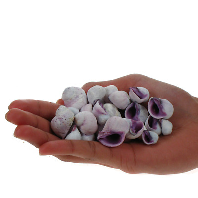 Assorted Purple Druppa Craft Shells, seashells, Hobby Shell Snails