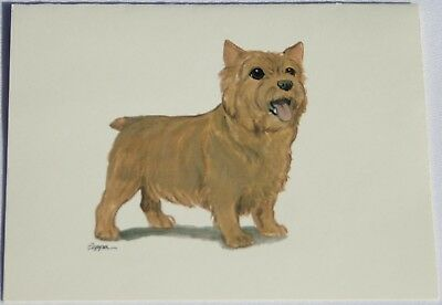 Norwich Terrier Dog Zeppa Studios Fur Children Note Cards Set of 8