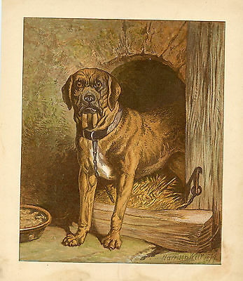 EARLY MASTIFF DOG ANTIQUE LITHOGRAPH 1879 by HARRISON WEIR