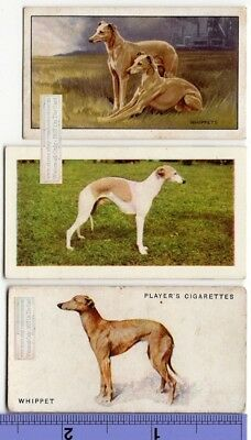 Whippet Dogs 3 Different Vintage Ad Trade Cards 2nd