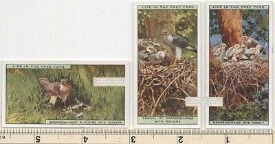 Sparrow Hawk Bird and Family Nest THREE 90+ Y/O Ad Trade Cards 2