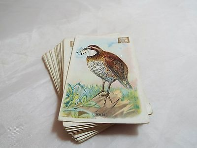 Useful Birds Of America First Series Complete Set Of 30 Cards By Arm And Hammer