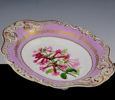 Lovely Early 19C English Porcelain Pink Ground Botanical Serving Bowl Tray Derby