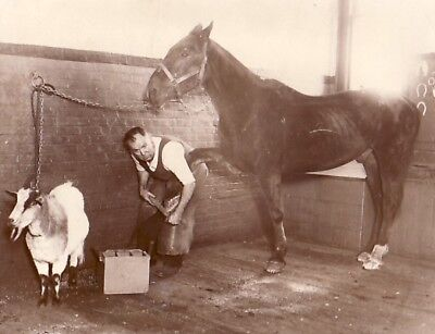 Military Blacksmith Shoeing Horse record Maréchal Ferrand NY Vintage Photo 1928