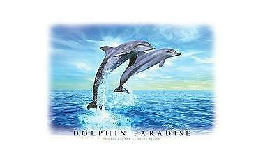 Delphine Poster Dolphin Paradise