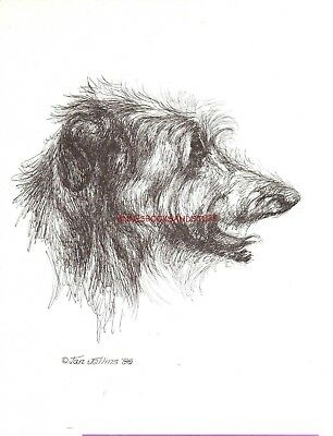 #388 SCOTTISH DEERHOUND *  dog art print  Pen & ink drawing * Jan Jellins