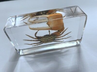 T-01 Vintage Crustacean Crab Specimen In Clear Paperweight Crafts