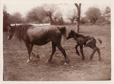 Stoke Orchard Horse Jubilee Colt baby Naissance poulain & jument old Photo 1935