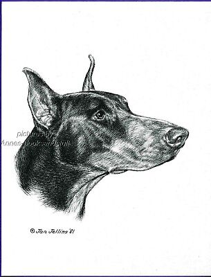 #285 red DOBERMAN PINSCHER  *  dog art print * Pen & ink drawing * Jan Jellins