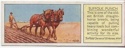 Suffolk Punch Draft Horse Breed Sorrel England c80 Y/O Trade Ad Card