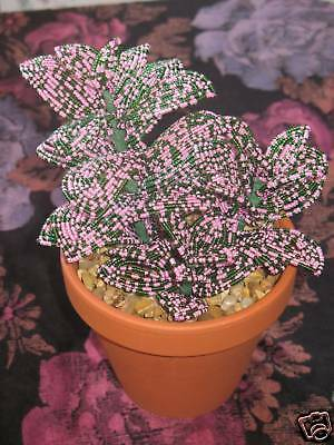French Beaded flowers pink Hypoestes polka dot plant with pot