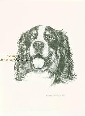 #265 BERNESE MOUNTAIN DOG dog art print * Pen and ink drawing by Jan Jellins