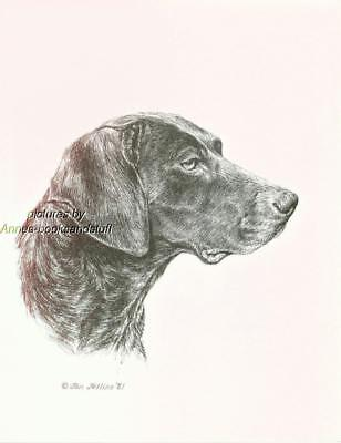 #281 GERMAN SHORTHAIRED POINTER dog art print * Pen & ink drawing by Jan Jellins