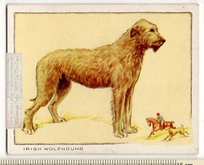 Irish Wolfhound Dog  80+ Y/O Trade Ad Card
