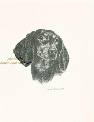 #232 Black & Tan DACHSHUND dog art print * Pen and ink drawing by Jan Jellins