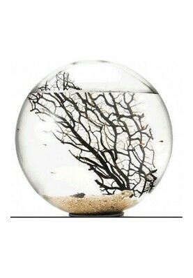 Bioglobe collection Gorgonia 25 cm
