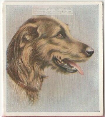 Irish Wolfhound Dog Pet Animal Canine c80 Y/O Trade Ad Card