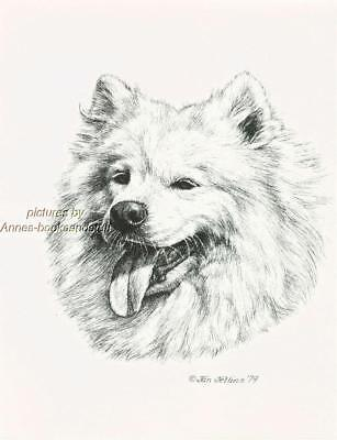 #238 SAMOYED dog portrait art print * Pen and ink drawing by Jan Jellins