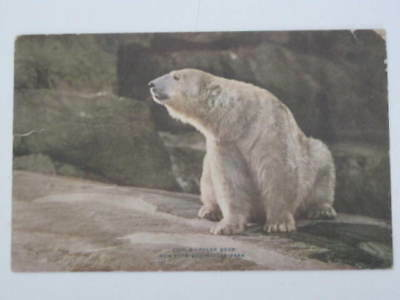 Vintage New York Zoo Postcard of Polar bear Zoological