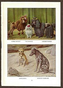 Chihuahua and Poodle Dog Print by Fuertes 1919