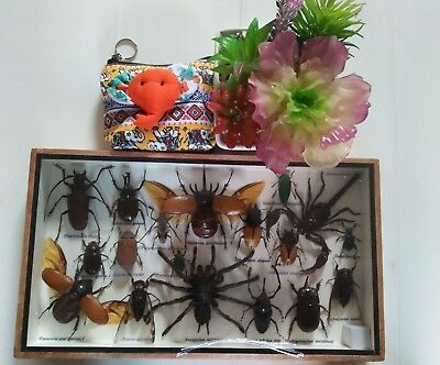 Real Rare Insects Spider Cicada Beetles Scorpion Taxidermy Display Framed Box