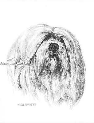 #355 LHASA APO dog art print * Pen and ink drawing by Jan Jellins
