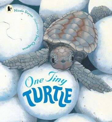 One Tiny Turtle (Nature Storybooks) (Paperback), Davies, Nicola, ...