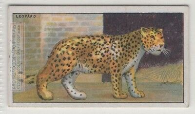 Leopard Panther  Large Wild Feline Cat Felis pardus 90+ Y/O Trade Ad Card