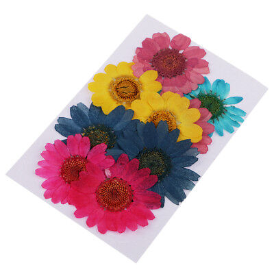 10 Pieces Dried Pressed Paludosum Daisy Flowers for Handmade Phone Case