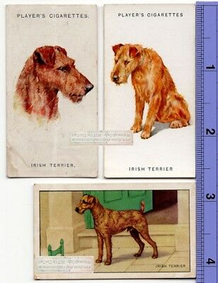 Irish Terrier Dogs 3 Different Vintage Ad Trade Cards 2nd