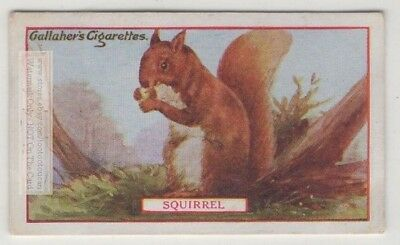 Commercial Value Of The Squirrel 90+ Y/O Trade Ad Card