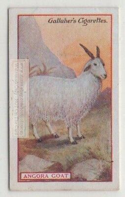 Commercial Value Of The Angora Goat 90+ Y/O Trade Ad Card