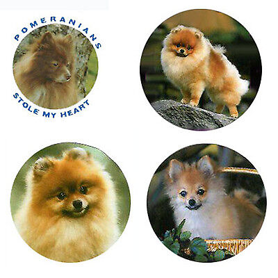 Pomeranian Magnets:4 Perky Poms for your Fridge or Collection-A Great Gift