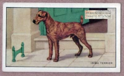 Irish Terrier Dog Canine Pet Vintage Ad Trade Card