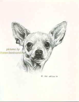 #23 CHIHUAHUA  dog art *  Pen and ink drawing * Jan Jellins