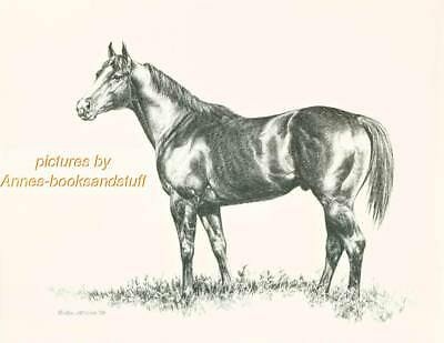 #213 QUARTER HORSE side view art print * Pen and ink drawing by Jan Jellins